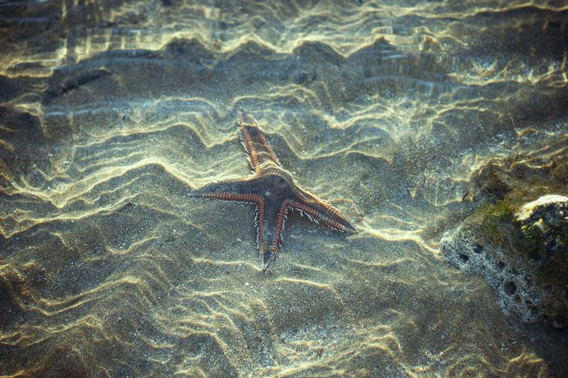 Starfish Marky
